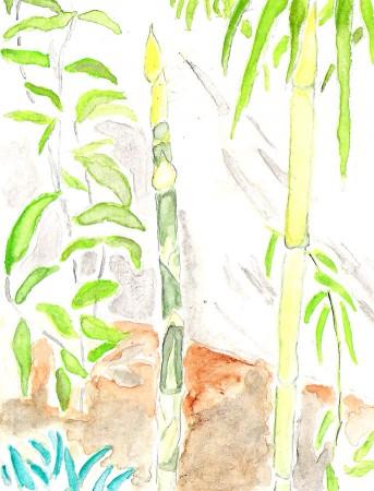 medium_bambou.2.jpg