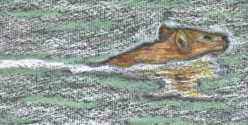 medium_pastel-chien-nageur.jpg